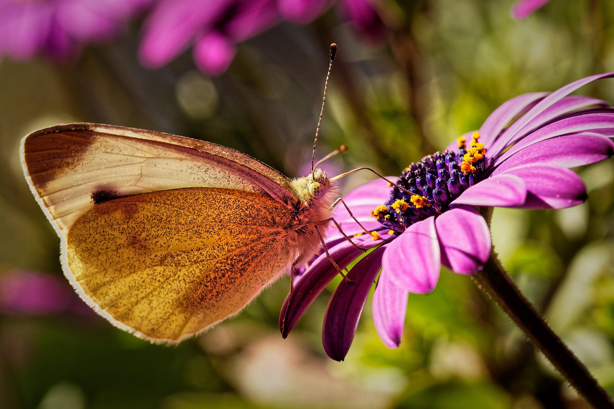Schmetterling am späten Nachmittag